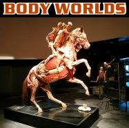Body Worlds Horse with RSF in London